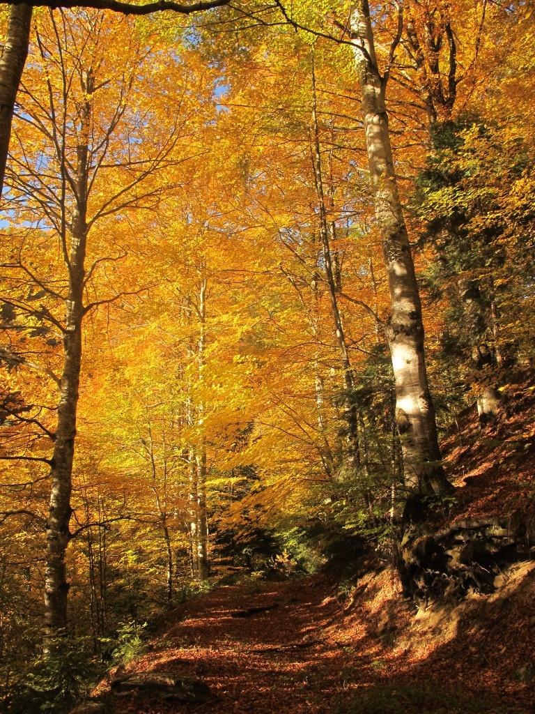 Forestier pe versantul drept al vaii Cobasel