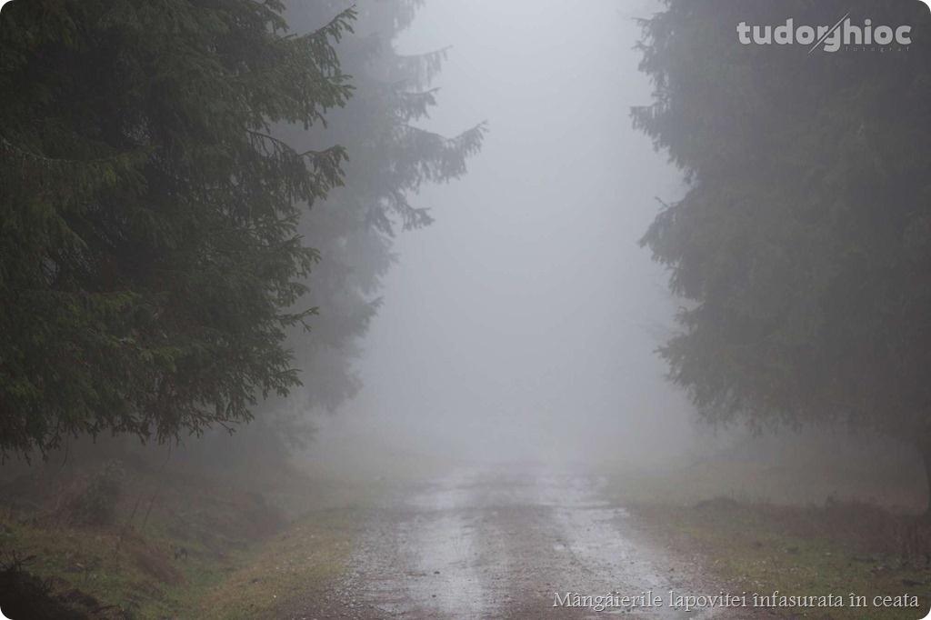 ©TudorGhioc (134)