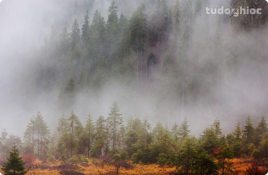 ©TudorGhioc (218)